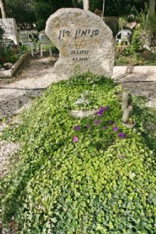 מצבה מאבן טבעית עם צמחיה ירוקה